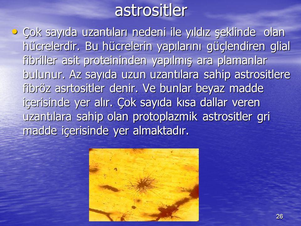 26 astrositler Çok sayıda uzantıları nedeni ile yıldız şeklinde olan hücrelerdir.