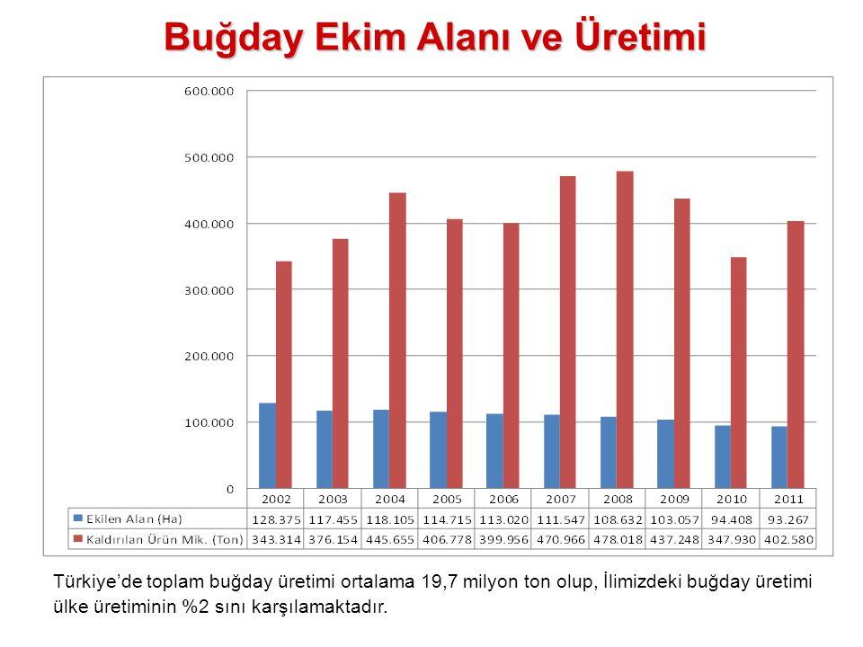 Buğday Ekim Alanı ve Üretimi Türkiye'de toplam buğday üretimi ortalama 19,7 milyon ton olup, İlimizdeki buğday üretimi ülke üretiminin %2 sını karşıla