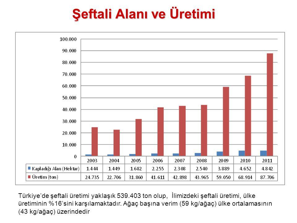 Şeftali Alanı ve Üretimi Türkiye'de şeftali üretimi yaklaşık 539.403 ton olup, İlimizdeki şeftali üretimi, ülke üretiminin %16'sini karşılamaktadır. A