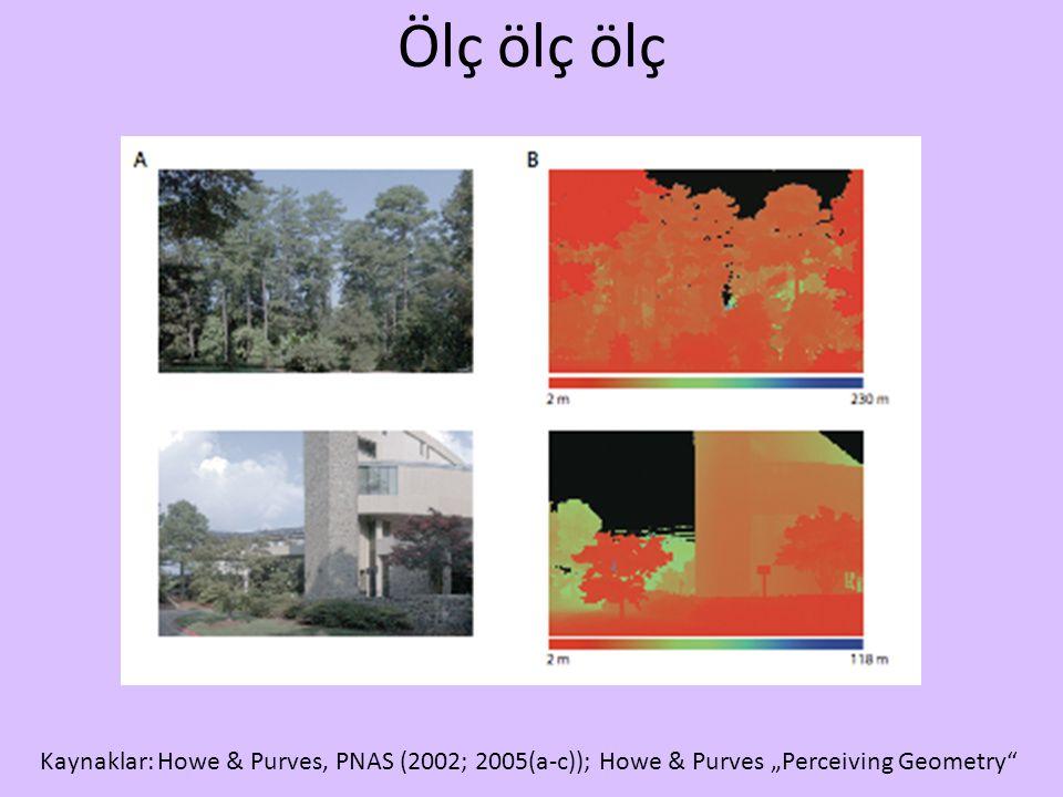 """Ölç ölç ölç Kaynaklar: Howe & Purves, PNAS (2002; 2005(a-c)); Howe & Purves """"Perceiving Geometry"""