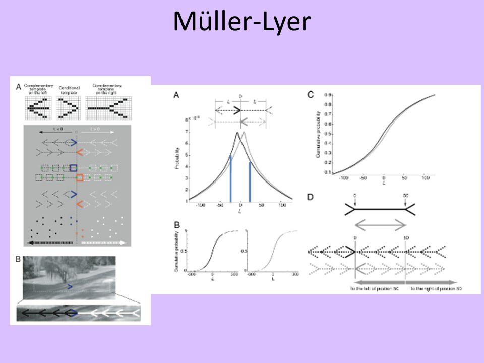 Müller-Lyer