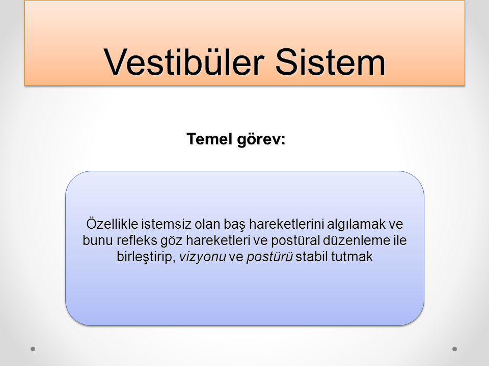 Vestibüler Sistem PeriferikPeriferikSantralSantral labirent vestibüler sinir beyin sapı beyin sapı vestibüler nukleuslar serebellum,vestibüler nukleus