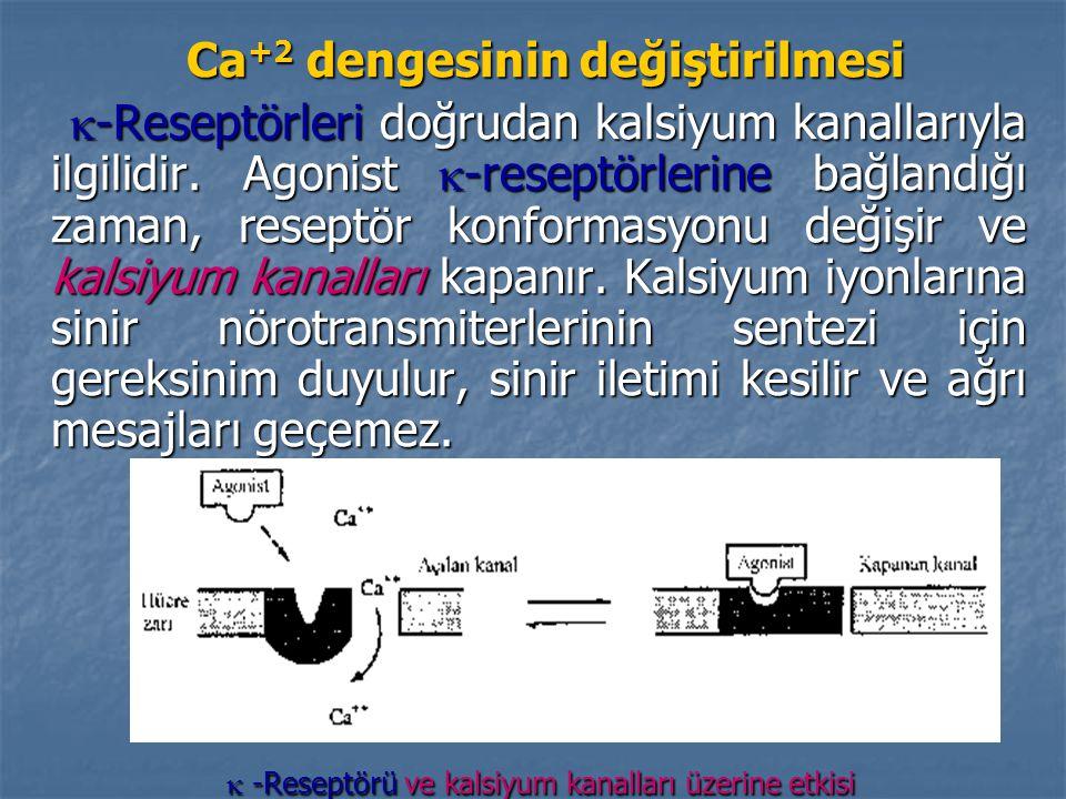 Ca +2 dengesinin değiştirilmesi Ca +2 dengesinin değiştirilmesi  -Reseptörleri doğrudan kalsiyum kanallarıyla ilgilidir.