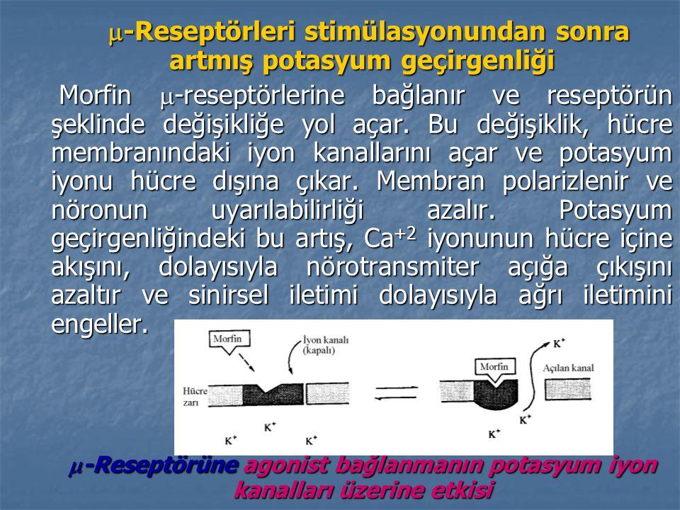  -Reseptörleri stimülasyonundan sonra artmış potasyum geçirgenliği  -Reseptörleri stimülasyonundan sonra artmış potasyum geçirgenliği Morfin  -reseptörlerine bağlanır ve reseptörün şeklinde değişikliğe yol açar.