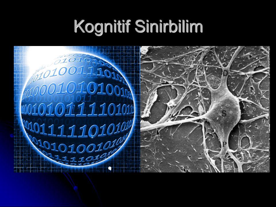 Kognitif Sinirbilim