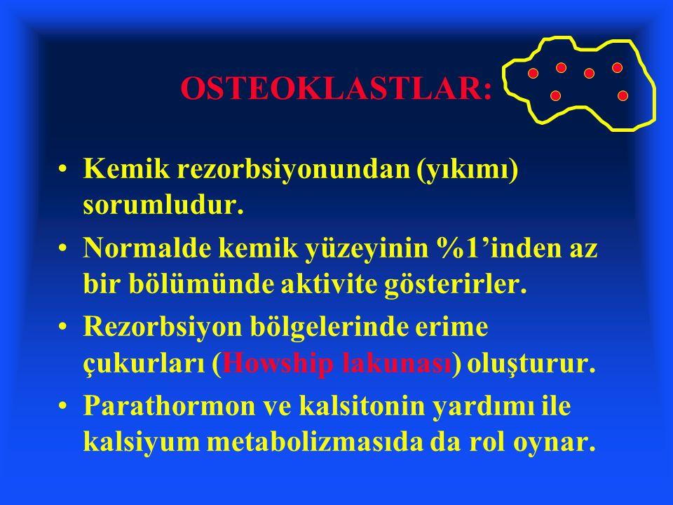 OSTEOKLASTLAR: Kemik rezorbsiyonundan (yıkımı) sorumludur. Normalde kemik yüzeyinin %1'inden az bir bölümünde aktivite gösterirler. Rezorbsiyon bölgel