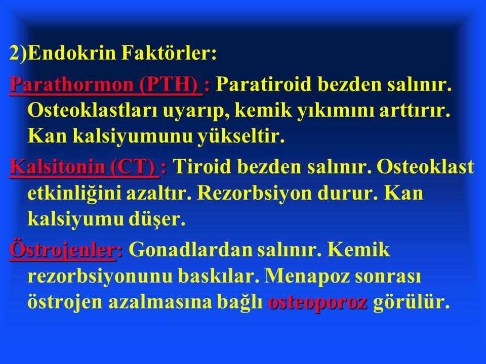 2)Endokrin Faktörler: Parathormon (PTH) : Parathormon (PTH) : Paratiroid bezden salınır. Osteoklastları uyarıp, kemik yıkımını arttırır. Kan kalsiyumu