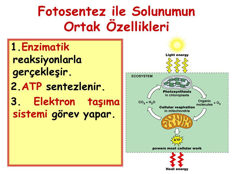 Fotosentez ile Solunumun Ortak Özellikleri 1.Enzimatik reaksiyonlarla gerçekleşir. 2.ATP sentezlenir. 3. Elektron taşıma sistemi görev yapar.