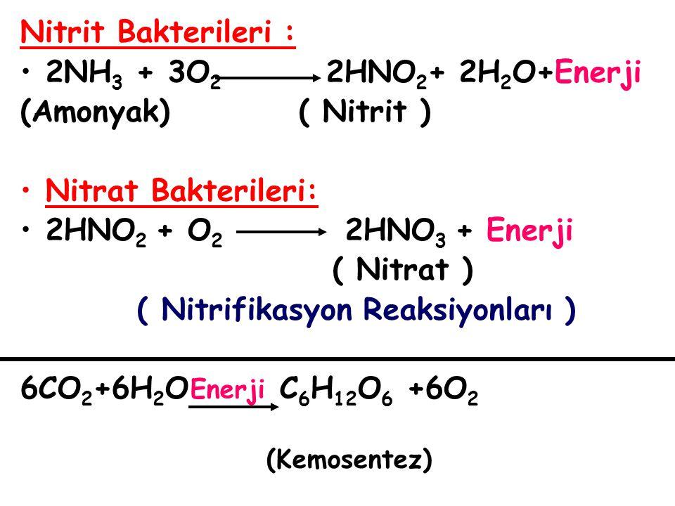 Nitrit Bakterileri : 2NH 3 + 3O 2 2HNO 2 + 2H 2 O+Enerji (Amonyak) ( Nitrit ) Nitrat Bakterileri: 2HNO 2 + O 2 2HNO 3 + Enerji ( Nitrat ) ( Nitrifikas