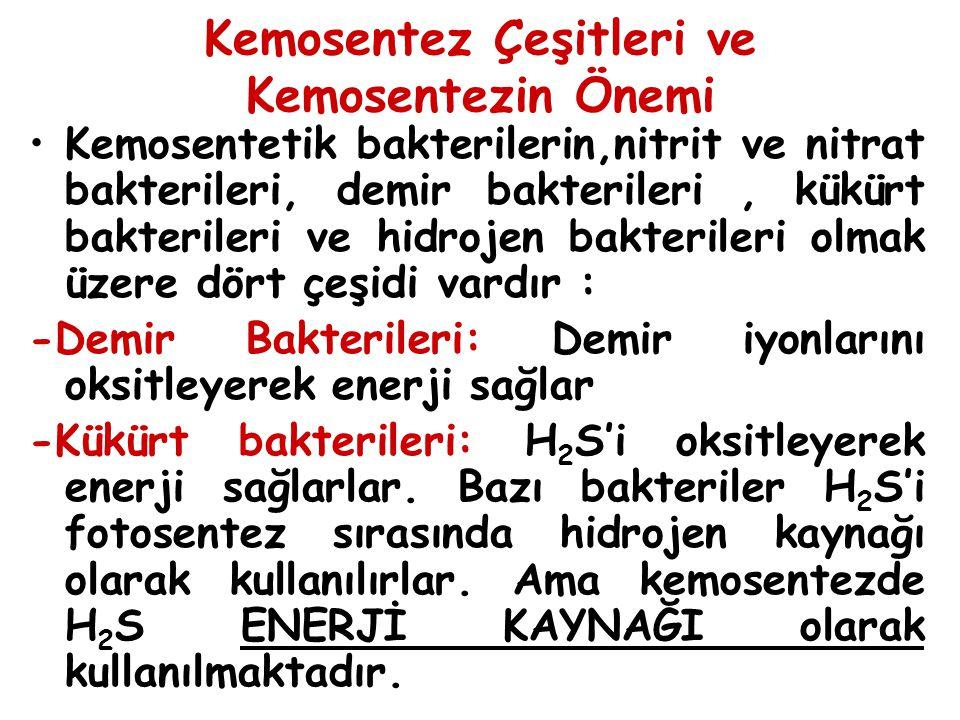 Kemosentez Çeşitleri ve Kemosentezin Önemi Kemosentetik bakterilerin,nitrit ve nitrat bakterileri, demir bakterileri, kükürt bakterileri ve hidrojen b