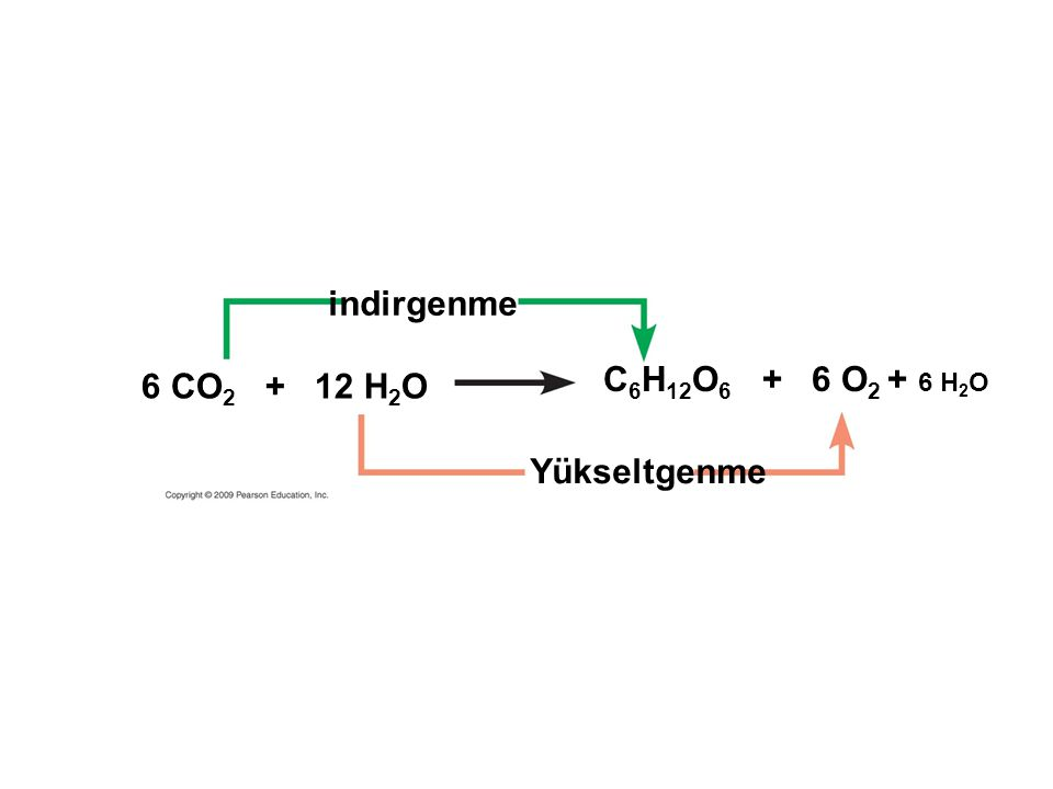 6 CO 2 + 12 H 2 O C 6 H 12 O 6 + 6 O 2 + 6 H 2 O indirgenme Yükseltgenme