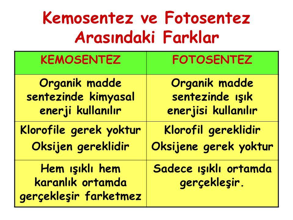 Kemosentez ve Fotosentez Arasındaki Farklar KEMOSENTEZFOTOSENTEZ Organik madde sentezinde kimyasal enerji kullanılır Organik madde sentezinde ışık ene