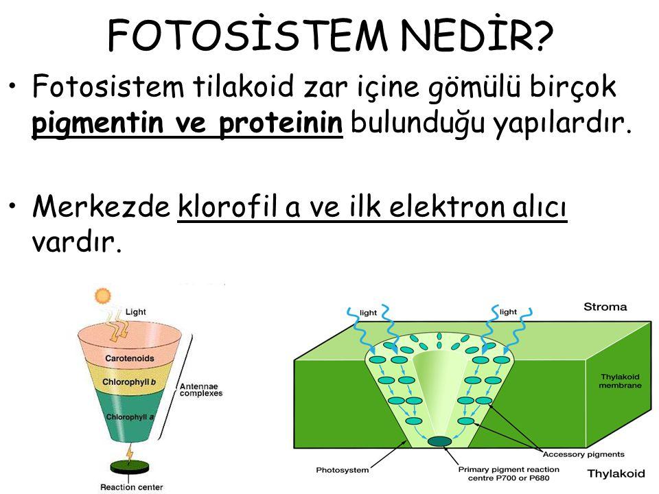 FOTOSİSTEM NEDİR? Fotosistem tilakoid zar içine gömülü birçok pigmentin ve proteinin bulunduğu yapılardır. Merkezde klorofil a ve ilk elektron alıcı v