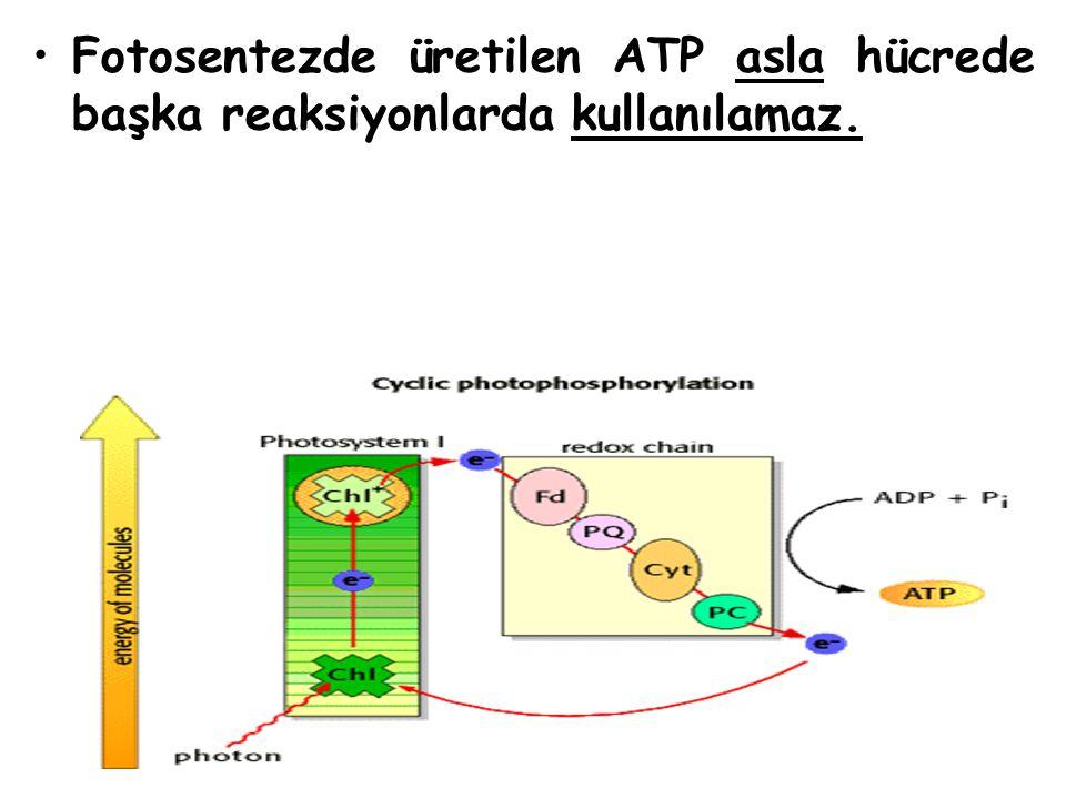 Fotosentezde üretilen ATP asla hücrede başka reaksiyonlarda kullanılamaz.