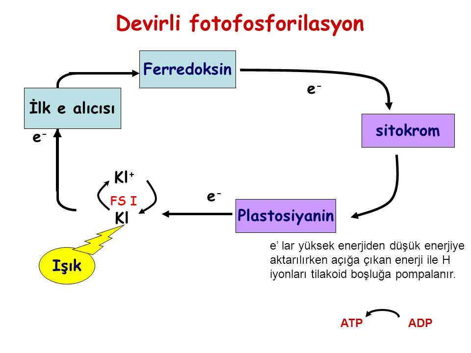 Devirli fotofosforilasyon Işık Ferredoksin sitokrom e-e- Kl Kl + e-e- e-e- İlk e alıcısı Plastosiyanin e' lar yüksek enerjiden düşük enerjiye aktarılı