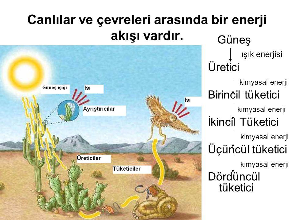 Canlılar ve çevreleri arasında bir enerji akışı vardır. Güneş ışık enerjisi Üretici kimyasal enerji Birincil tüketici kimyasal enerji İkincil Tüketici