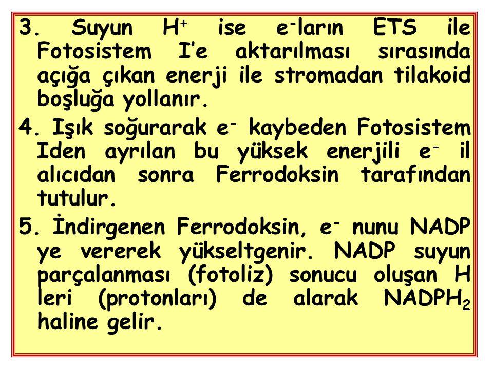 3. Suyun H + ise e - ların ETS ile Fotosistem I'e aktarılması sırasında açığa çıkan enerji ile stromadan tilakoid boşluğa yollanır. 4. Işık soğurarak