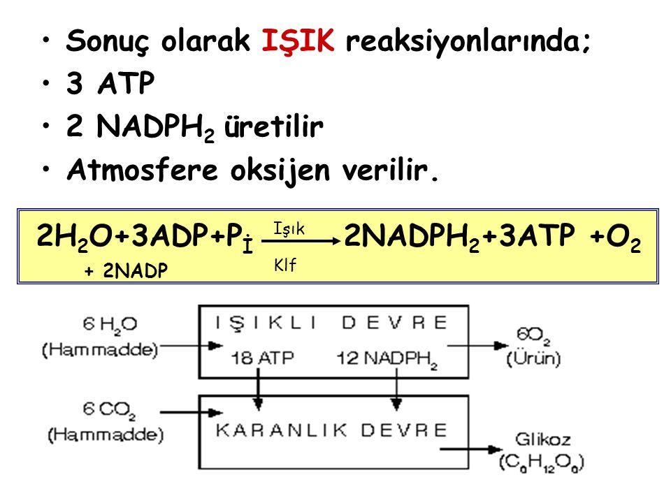 Sonuç olarak IŞIK reaksiyonlarında; 3 ATP 2 NADPH 2 üretilir Atmosfere oksijen verilir. 2H 2 O+3ADP+P İ 2NADPH 2 +3ATP +O 2 Işık Klf + 2NADP