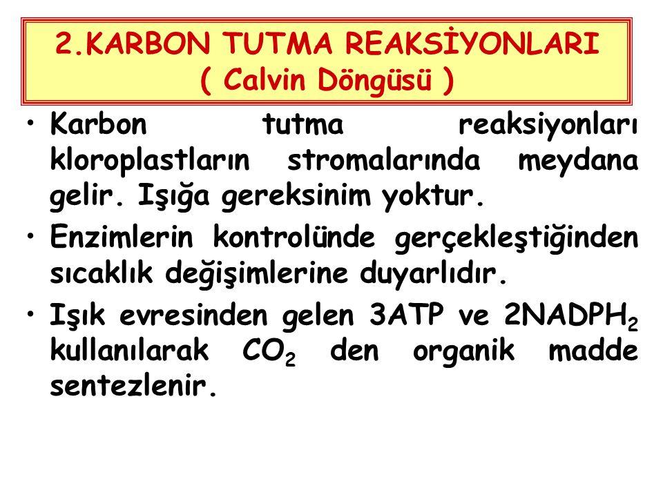 2.KARBON TUTMA REAKSİYONLARI ( Calvin Döngüsü ) Karbon tutma reaksiyonları kloroplastların stromalarında meydana gelir. Işığa gereksinim yoktur. Enzim