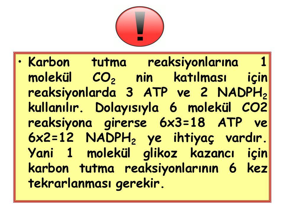 Karbon tutma reaksiyonlarına 1 molekül CO 2 nin katılması için reaksiyonlarda 3 ATP ve 2 NADPH 2 kullanılır. Dolayısıyla 6 molekül CO2 reaksiyona gire