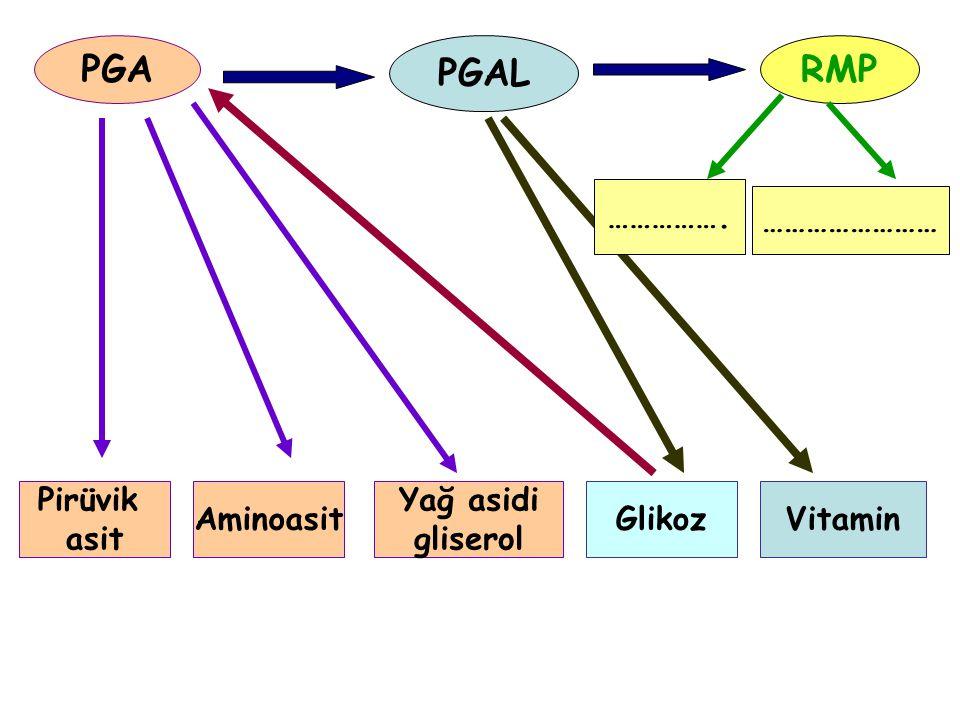PGA PGAL RMP Pirüvik asit Aminoasit Yağ asidi gliserol GlikozVitamin ……………. ……………………