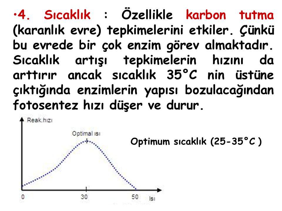 4. Sıcaklık : Özellikle karbon tutma (karanlık evre) tepkimelerini etkiler. Çünkü bu evrede bir çok enzim görev almaktadır. Sıcaklık artışı tepkimeler