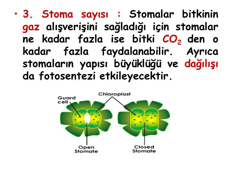 3. Stoma sayısı : Stomalar bitkinin gaz alışverişini sağladığı için stomalar ne kadar fazla ise bitki CO 2 den o kadar fazla faydalanabilir. Ayrıca st