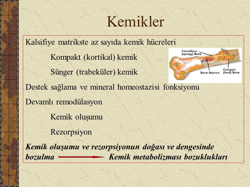Kemikler Kalsifiye matrikste az sayıda kemik hücreleri Kompakt (kortikal) kemik Sünger (trabeküler) kemik Destek sağlama ve mineral homeostazisi fonks
