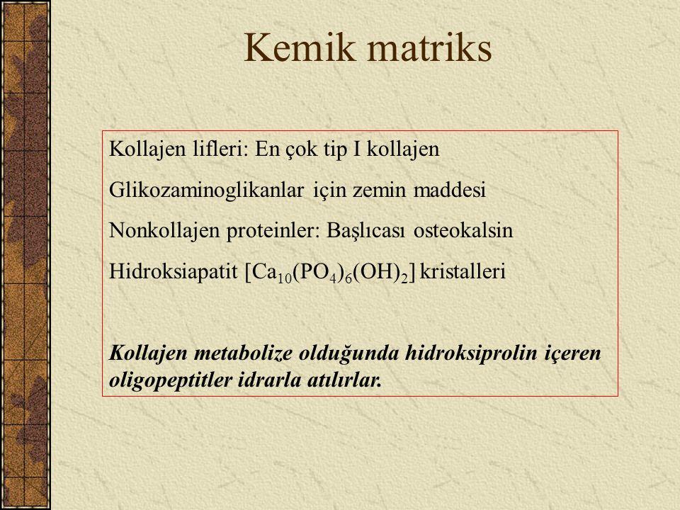 Kemik matriks Kollajen lifleri: En çok tip I kollajen Glikozaminoglikanlar için zemin maddesi Nonkollajen proteinler: Başlıcası osteokalsin Hidroksiap