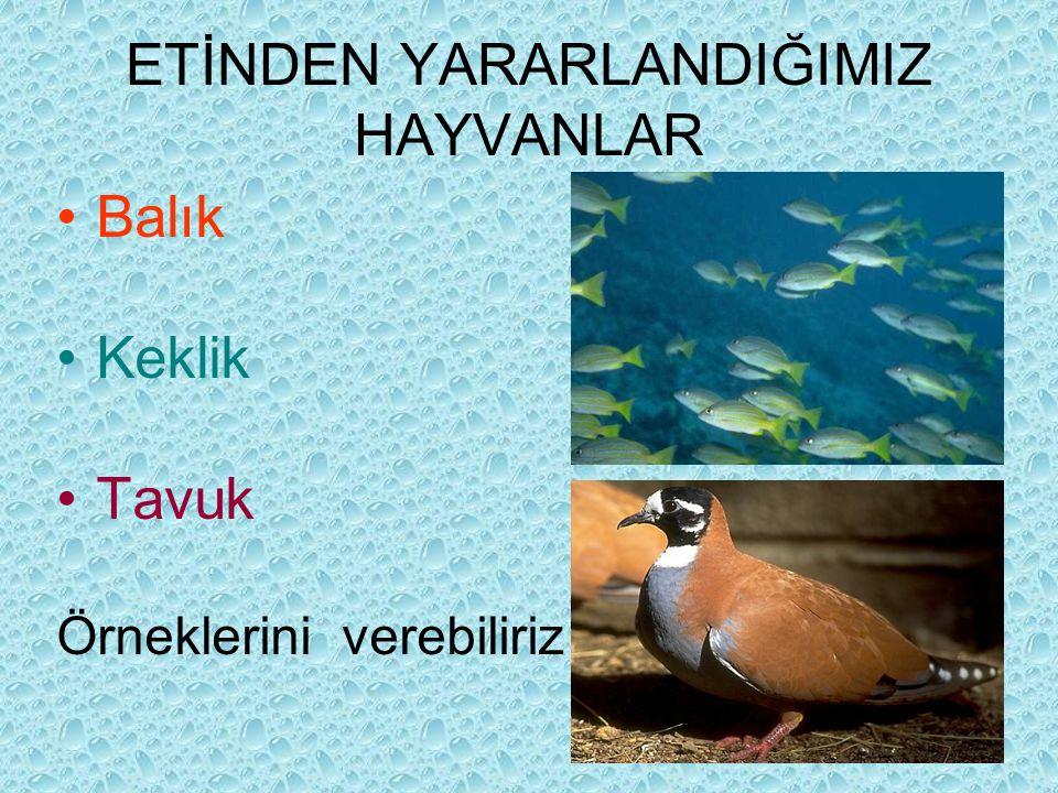 ETİNDEN YARARLANDIĞIMIZ HAYVANLAR Balık Keklik Tavuk Örneklerini verebiliriz