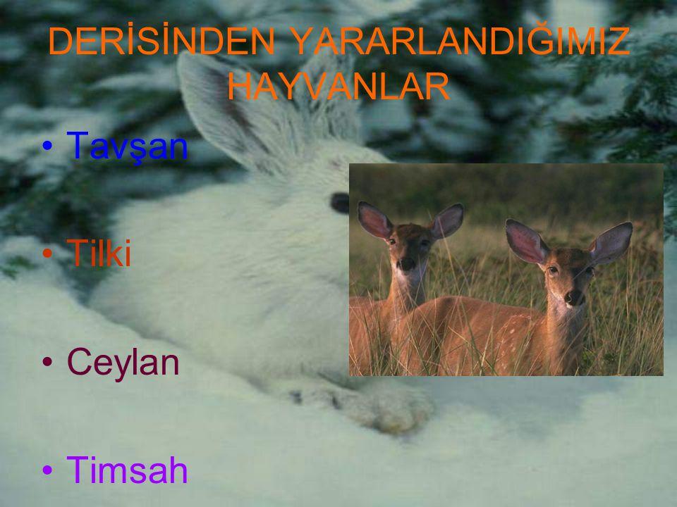 DERİSİNDEN YARARLANDIĞIMIZ HAYVANLAR Tavşan Tilki Ceylan Timsah