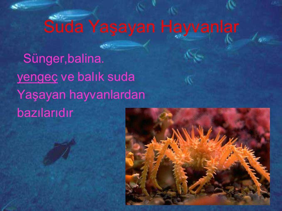 Suda Yaşayan Hayvanlar Sünger,balina. yengeç ve balık suda Yaşayan hayvanlardan bazılarıdır