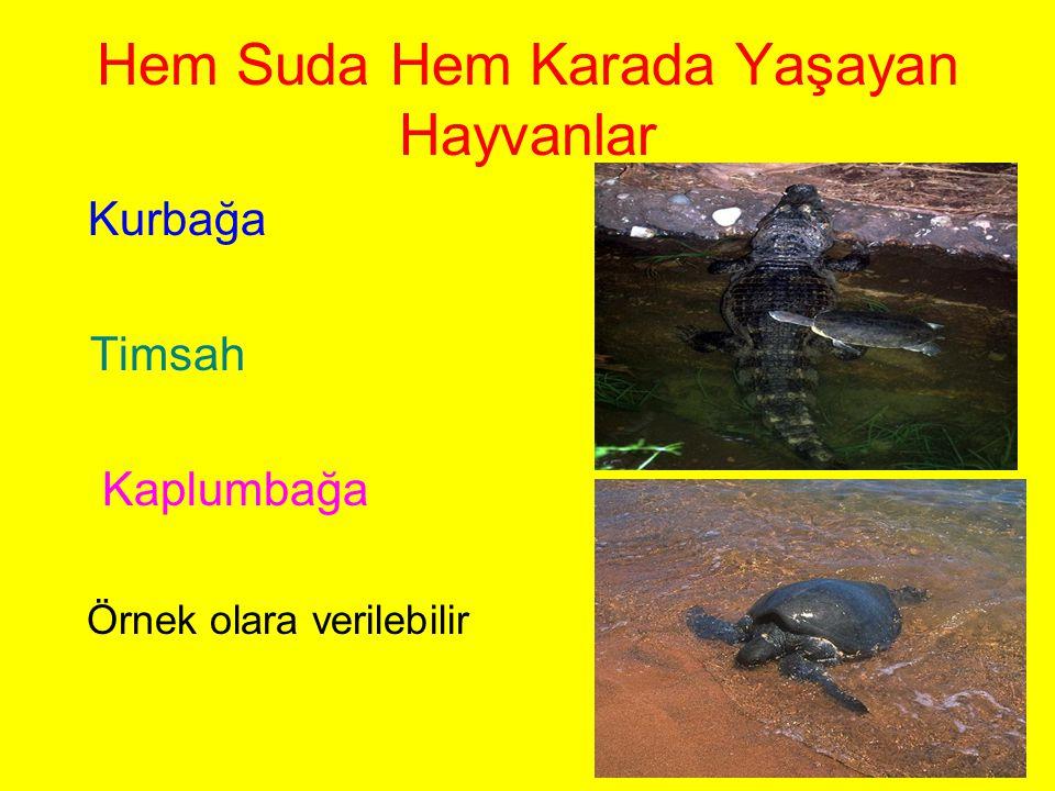 Hem Suda Hem Karada Yaşayan Hayvanlar Kurbağa Timsah Kaplumbağa Örnek olara verilebilir