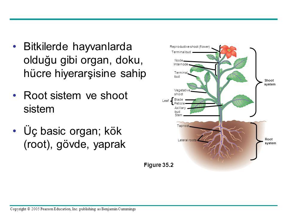 Copyright © 2005 Pearson Education, Inc. publishing as Benjamin Cummings Bitkilerde hayvanlarda olduğu gibi organ, doku, hücre hiyerarşisine sahip Roo