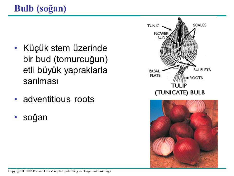 Copyright © 2005 Pearson Education, Inc. publishing as Benjamin Cummings Bulb (soğan) Küçük stem üzerinde bir bud (tomurcuğun) etli büyük yapraklarla