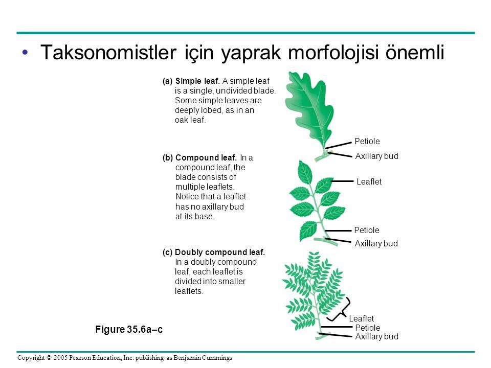 Taksonomistler için yaprak morfolojisi önemli Figure 35.6a–c Petiole (a) Simple leaf. A simple leaf is a single, undivided blade. Some simple leaves a