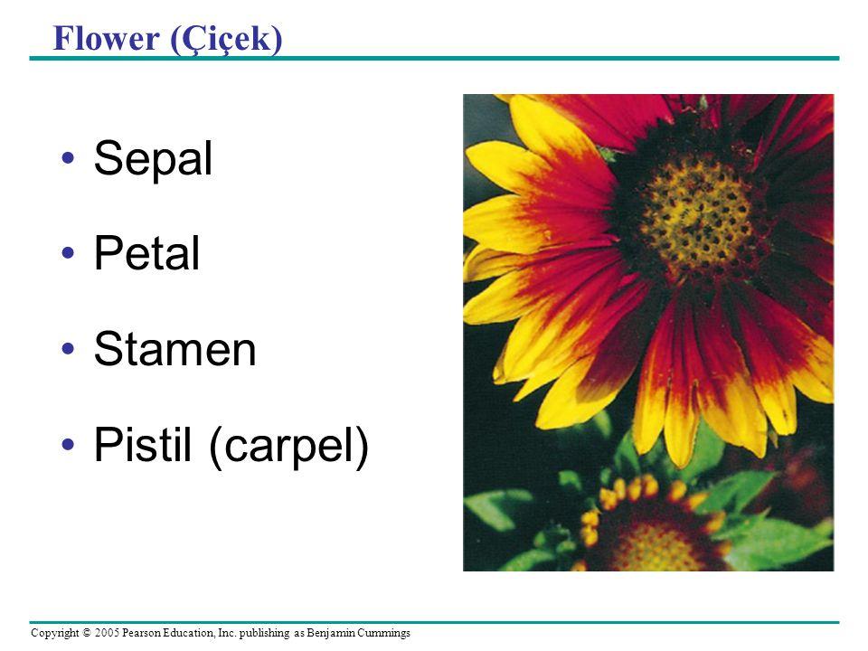 Copyright © 2005 Pearson Education, Inc. publishing as Benjamin Cummings Flower (Çiçek) Sepal Petal Stamen Pistil (carpel)