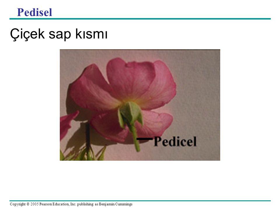 Copyright © 2005 Pearson Education, Inc. publishing as Benjamin Cummings Pedisel Çiçek sap kısmı