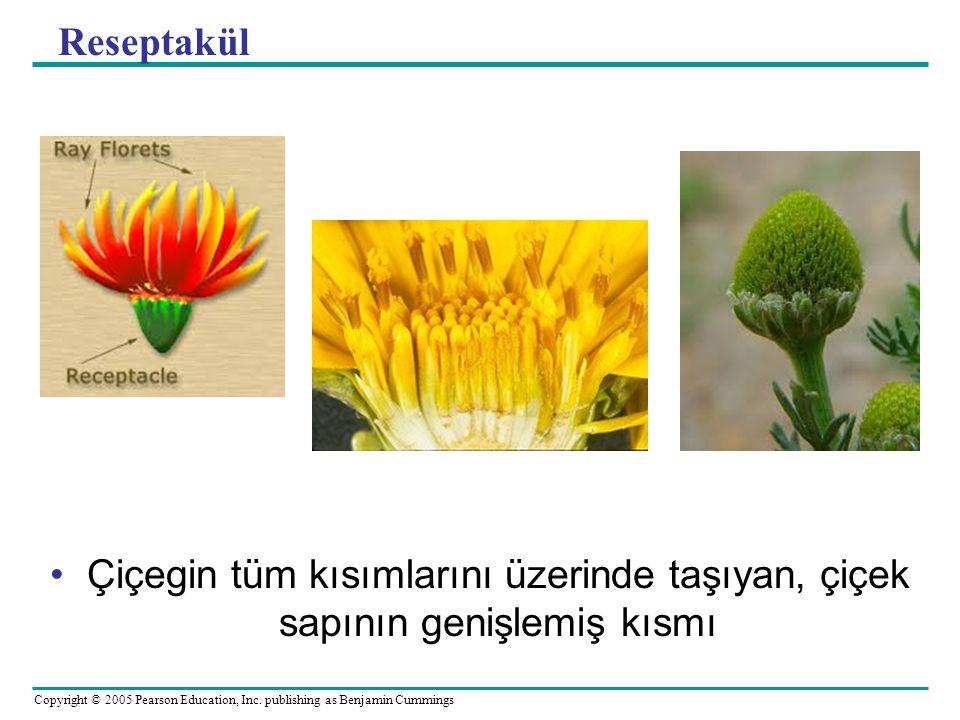 Copyright © 2005 Pearson Education, Inc. publishing as Benjamin Cummings Reseptakül Çiçegin tüm kısımlarını üzerinde taşıyan, çiçek sapının genişlemiş