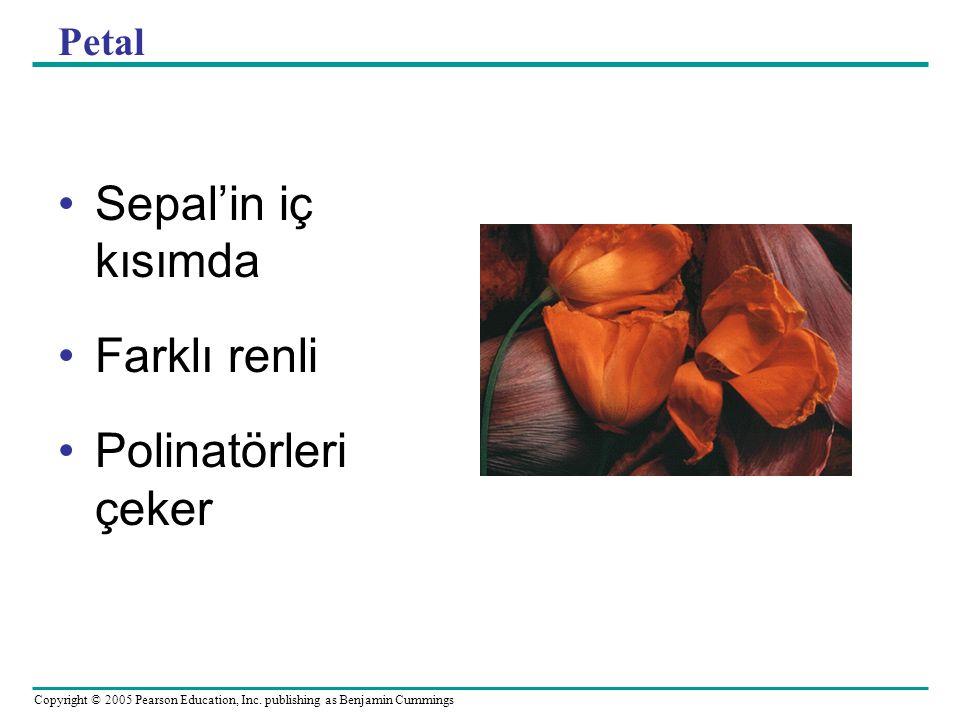 Copyright © 2005 Pearson Education, Inc. publishing as Benjamin Cummings Petal Sepal'in iç kısımda Farklı renli Polinatörleri çeker