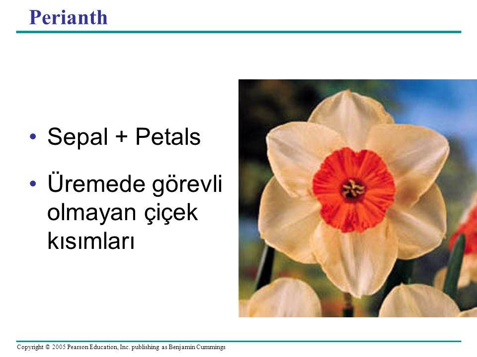 Copyright © 2005 Pearson Education, Inc. publishing as Benjamin Cummings Perianth Sepal + Petals Üremede görevli olmayan çiçek kısımları