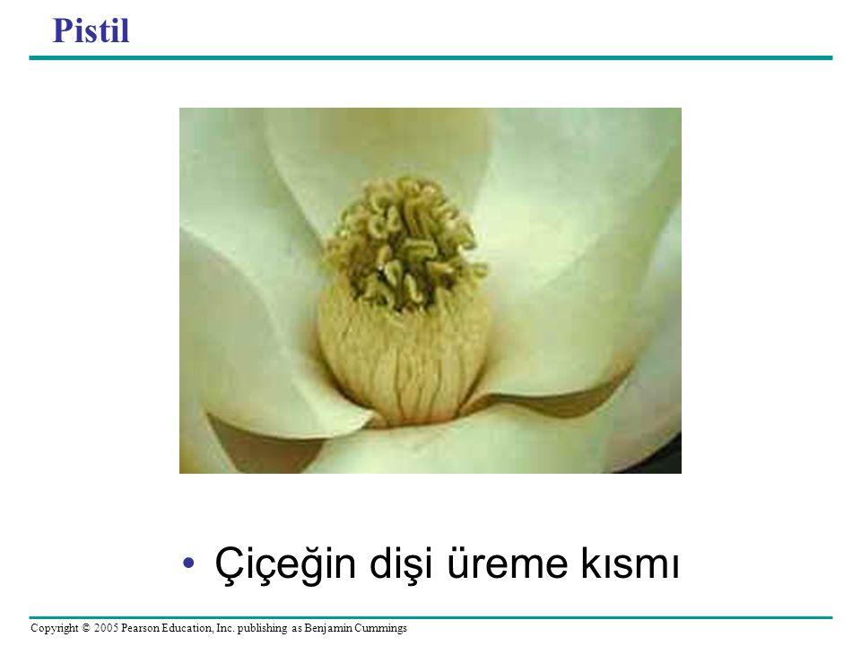 Copyright © 2005 Pearson Education, Inc. publishing as Benjamin Cummings Pistil Çiçeğin dişi üreme kısmı