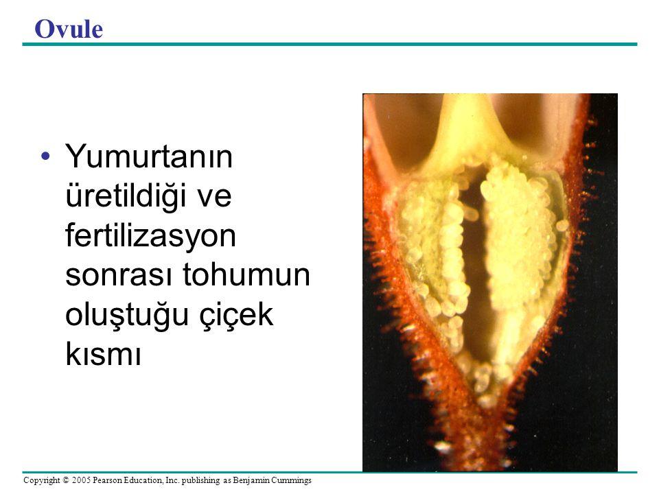 Copyright © 2005 Pearson Education, Inc. publishing as Benjamin Cummings Ovule Yumurtanın üretildiği ve fertilizasyon sonrası tohumun oluştuğu çiçek k