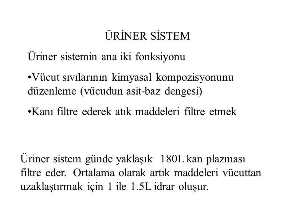 Üriner sistemin ana fonksiyonel organı böbreklerdir.