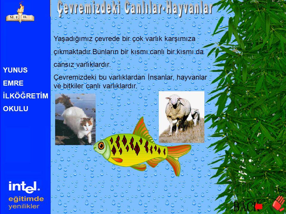 YUNUS EMRE İLKÖĞRETİM OKULU Bu Ünitenin Sonunda  Çevremizde gördüğümüz hayvanları tanıma  Çevremizde karada yaşayan hayvanları tanıma  Çevremizde s