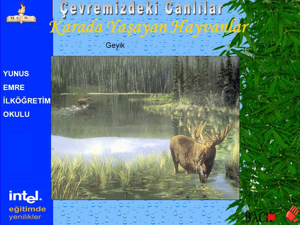YUNUS EMRE İLKÖĞRETİM OKULU Karada Yaşayan Hayvanlar Fil