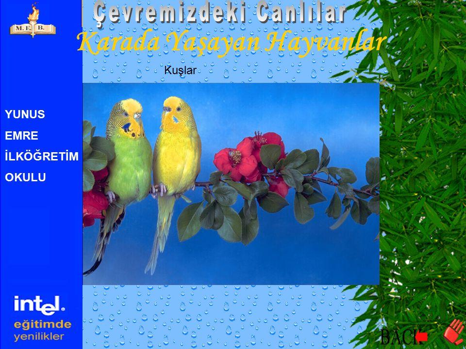 YUNUS EMRE İLKÖĞRETİM OKULU Karada Yaşayan Hayvanlar Kuşlar