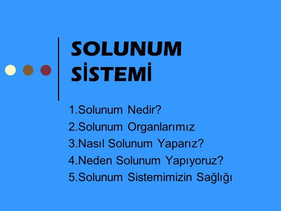 SOLUNUM S İ STEM İ 1.Solunum Nedir? 2.Solunum Organlarımız 3.Nasıl Solunum Yaparız? 4.Neden Solunum Yapıyoruz? 5.Solunum Sistemimizin Sağlığı