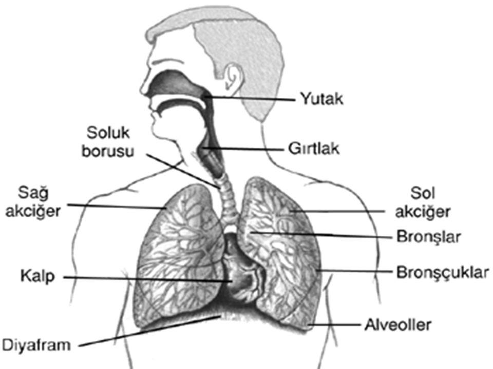 Diyafram gevşediği zaman yukarı doğru hareket eder.Böylece akciğerlerin de hacmini küçültür ve hava akciğerlerden dışarı çıkar.Buna soluk verme denir.