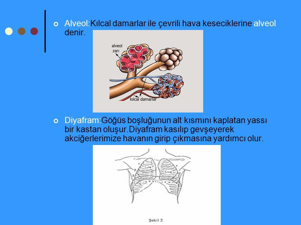 Alveol:Kılcal damarlar ile çevrili hava keseciklerine alveol denir. Diyafram:Göğüs boşluğunun alt kısmını kaplatan yassı bir kastan oluşur.Diyafram ka